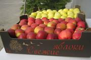 Яблоки айдаред,  семеринко,  голден мелроуз