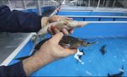 Главный рыбовод